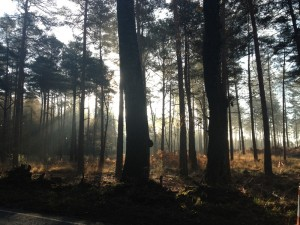 early morning mist in Wareham Forest by The Pink House Lulworth