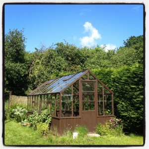 vintage-cedar-wood-greenhouse-at-The-Pink-House-Lulworth-Dorset