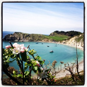 walking-from-The-Pink-House-Lulworth-we-caught-the-last-of-the-wild-apple-blossom-on-the-cliffs-above-the-Cove