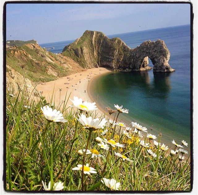 daisies at durdle door ©thepinkhouselulworth.co.uk