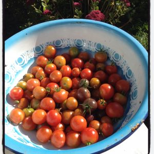 tomatoes from the garden of The Pink House Lulworth