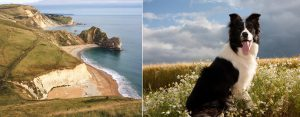 pet friendly hiking holidays at The Pink House Lulworth